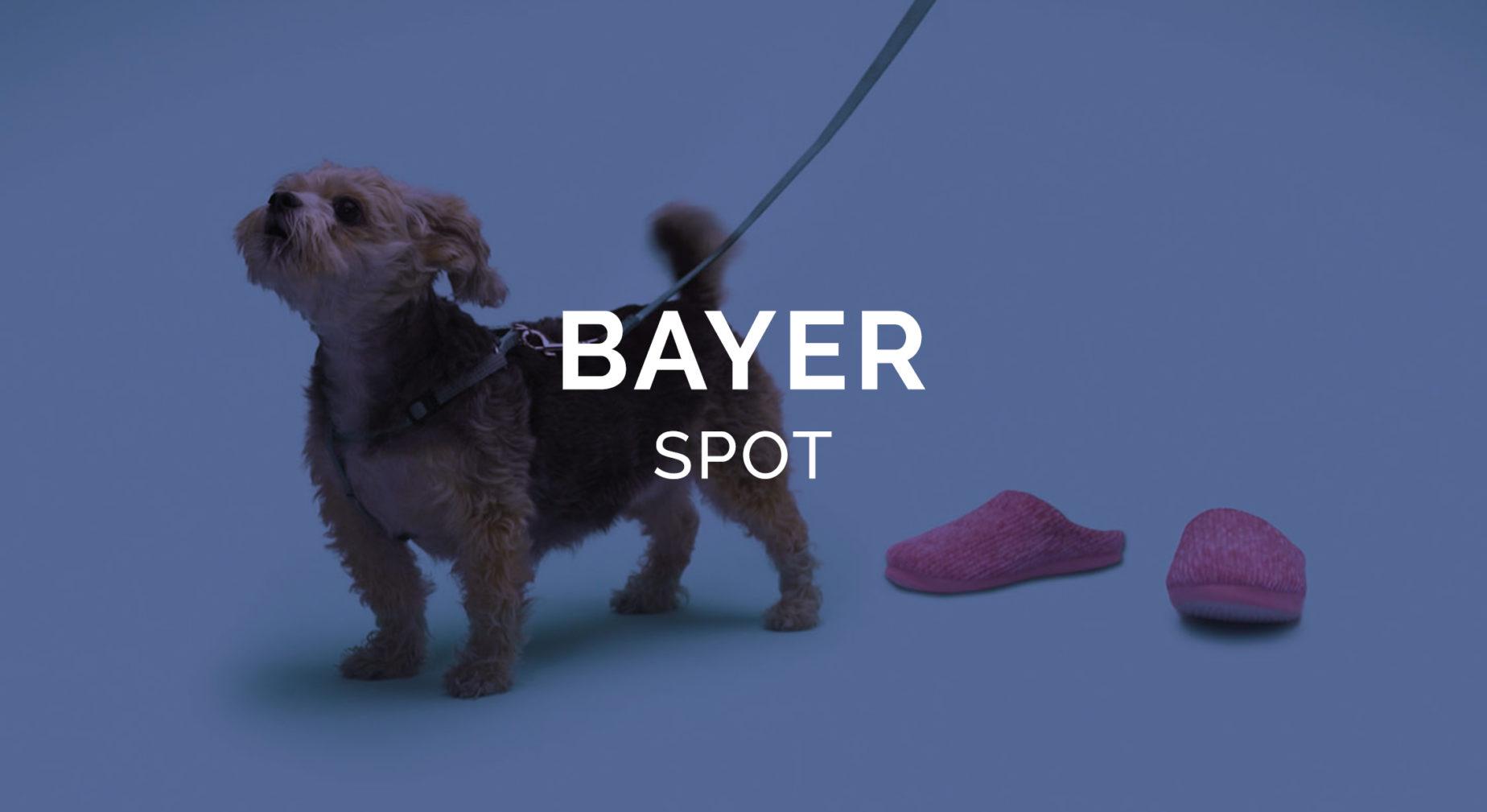 Bayer SMA perro